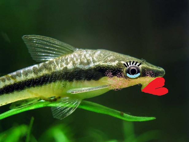 Scelta pesce pulitore sostituto plecostomus pagina 2 for Pesce pulitore acqua dolce