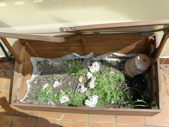 Tartarughe in terrario artigianale for Tartarughe appena nate