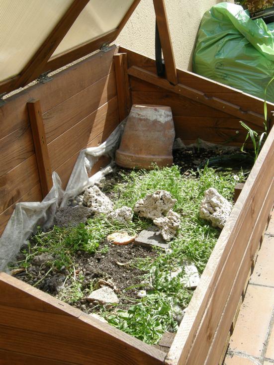 tartarughe in terrario artigianale