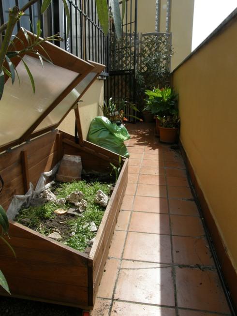 Tartarughe in terrario artigianale for Laghetto per tartarughe di terra