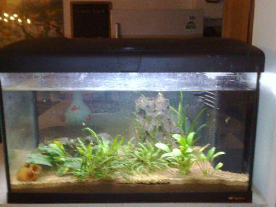 Acquario 40 lt pesci for Acquario nuovo prezzi