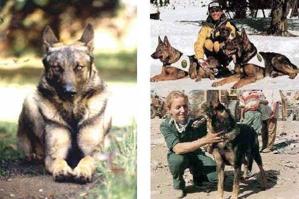 Razze Rare - Cani - Forum Animali nel Mondo