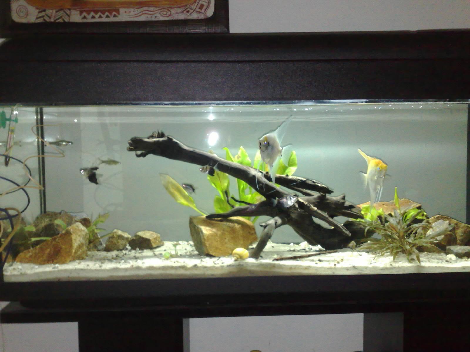 Arredare l acquario for Fondo per acquario