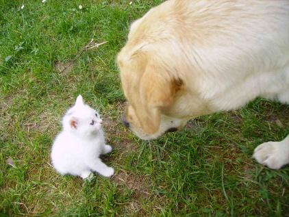 Dharma si è innamorata dei gattini appena nati........e loro ricambiano (dal sito) dans gatti carini carini
