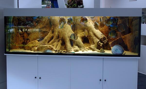 come costruire uno sfondo 3d? - acquaportal forum acquario dolce e ... - Sfondo Esterno Per Acquario Fai Da Te