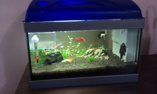 Acquario piccoli avanotti e nuovo allestimento for Piccoli acquari per pesci rossi