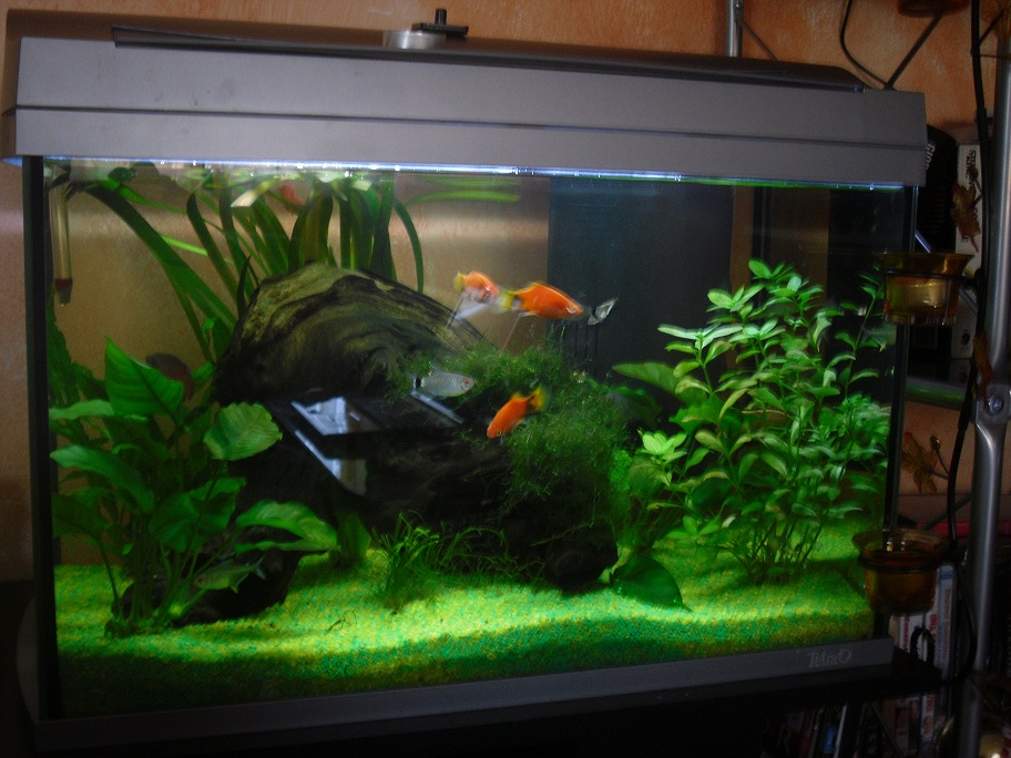 Trasloco acquario for Filtro vasca pesci