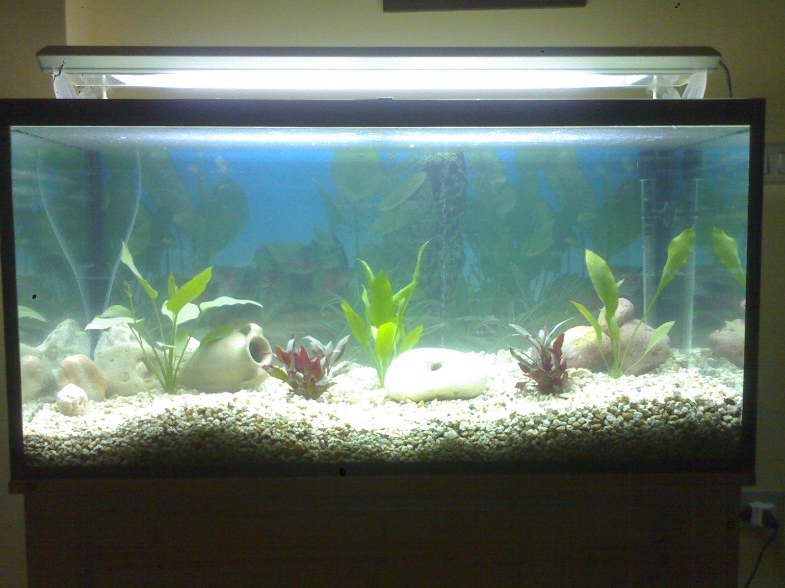 Allestimento x acquario for Fondo per acquario