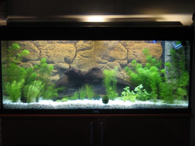 Nuovo acquario for Acquario 250 litri