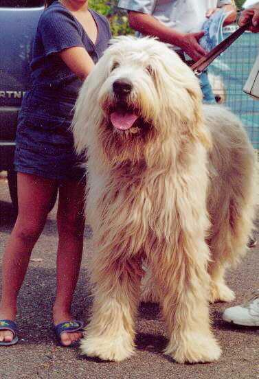 Il cane pastore della russia meridionale for Cane da pastore della russia meridionale