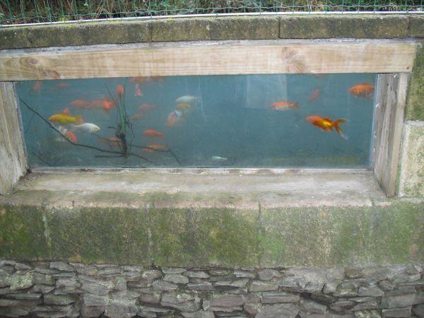 laghetto pesci rossi