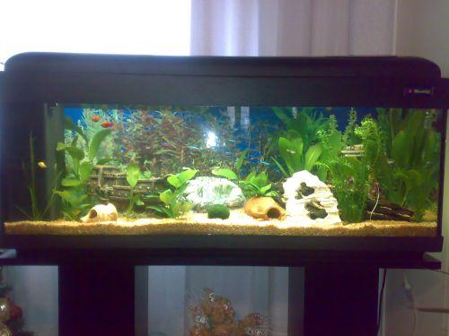 Quanti pesci for Acquario 120 litri