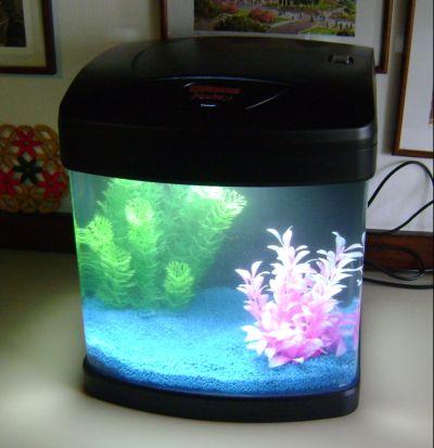 Aiuto informazioni entro domani yahoo answers for Quanto vivono i pesci rossi