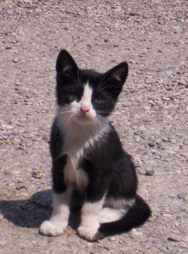 aiuto gattini nel secchio [Archivio] , IL FORUM DI INSEPARABILE dove  possiamo discutere di animali, cani, gatti, pesci, uccelli,