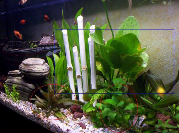 Si pu creare un acquario senza pesci for Pesci per acquario piccolo