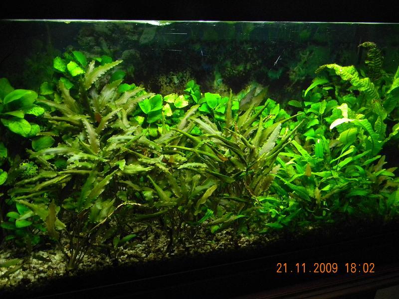 Piante acquario senza fondo fertile casamia idea di immagine for Fondo per acquario