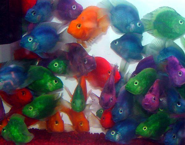Pesci trasparenti for Comprare pesci