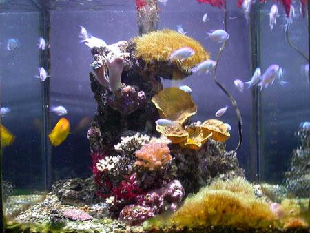 Sono nuova ed inesperta pagina 2 for Acquario marino 100 litri prezzo