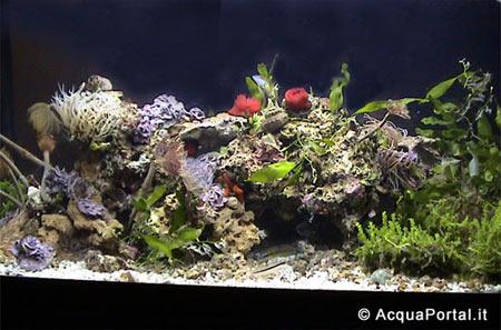Sono nuova ed inesperta pagina 2 for Acquario per tartarughe piccole