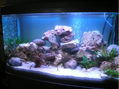 Ciottoli acquario