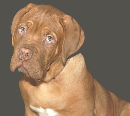 Il mio dogue de bordeaux pagina 2 for Tequila e bonetti cane