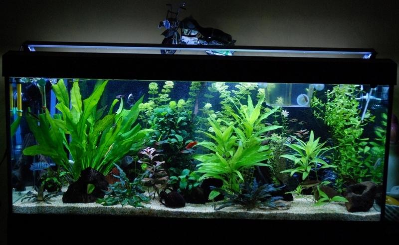 Plafoniera Led Acquario Acqua Dolce : Plafoniere per acquario dolce haquoss plafoniera a led